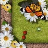 Le papillon et les coccinelles