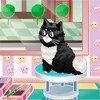 Salon de beauté pour chat